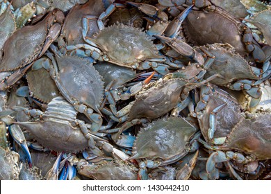 Background with many crab ready for the restaurant.