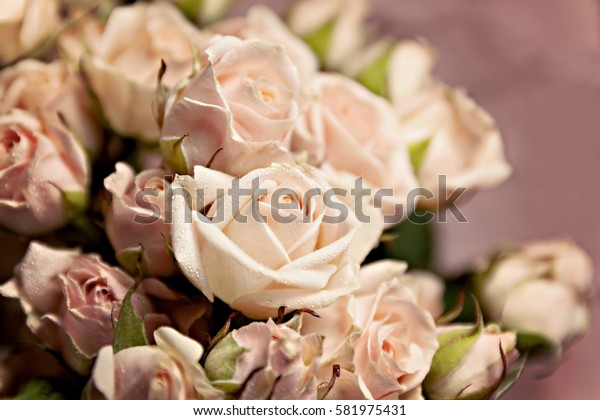 background of the many delicate little pink roses.
