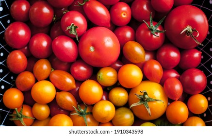 background of many different varieties of tomatoes in various colors photographed from above
