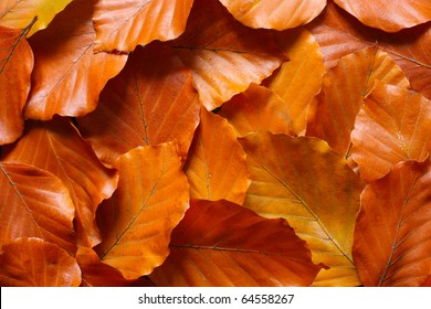 Background from many leaves