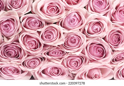 the background of many pink roses