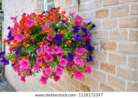 Background Mix Flowers Hanging Beside Wall Stock Photo Edit Now