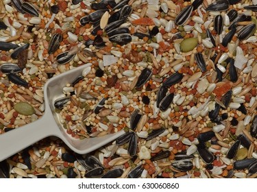 Background of mixed seed for Cockatiels and other smaller parrots bought from a local pet store, complete with scoop.
