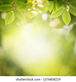 Background nature green leaf on blurred greenery in forest with copy space.