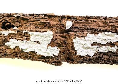 background of nest termite damaged wooden eaten