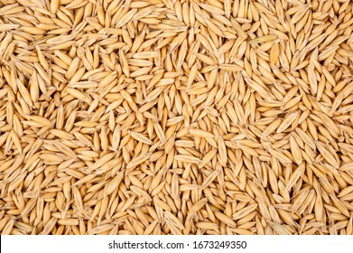 Background of oat grains. Healthy eating