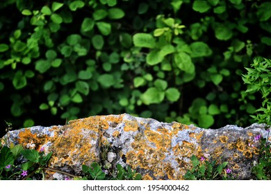 Background of old brick wall and green tree