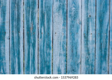 Background from old fence boards in blue. The paint is peeling, cracked. Hammered hats of rusty nails stick out.