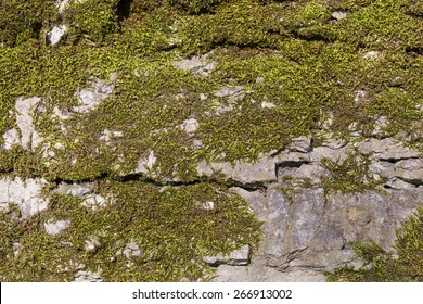 Background of old stone wall texture with moss