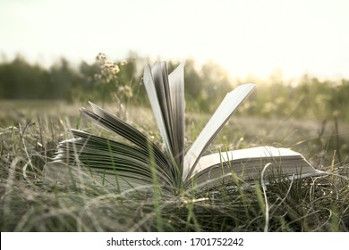 Background of opened book with landscape - lying in autumn field or meadow on yellow and green grass on sunset sky and forest backdrop against sun light Empty copy space for inscription.