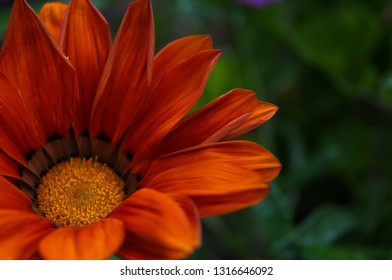 background orange daisy flower