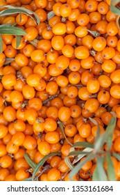 Background of orange ripe sea buckthorn berries