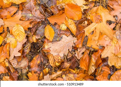 Background of orange and yellow autumnal leaves lying on ground. Autumn concept backdrop.