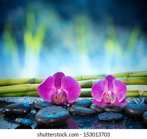 Background orchids stone and bamboo in garden