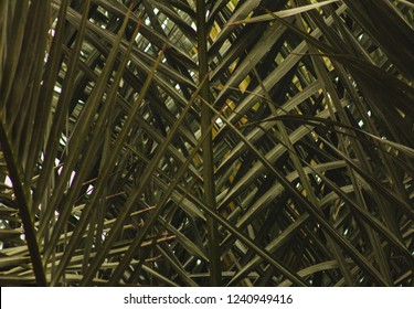 background of palm fronds and leaves , Green leaves of tropical forest plant for nature pattern and background, People grow plants to make fences. color dark flat lay tone for input text.