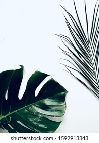 Background of palm leaves on white background. Space for text and objects. Top view. Flat lay.
