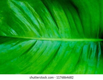 Background Pattern, Abstract Green Leaf Textured and Background with Copy Space for Text Decorated.