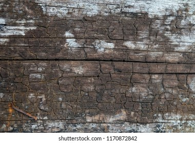 Background Pattern, Horizontal Brown Wooden Grain with Old Rusty Nail. Copy Space for Text Decorated.