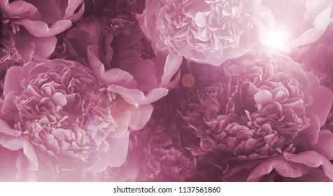 Royalty Free Black Flower Wallpaper Images Stock Photos Vectors