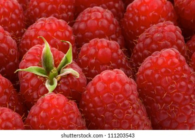 Background of Perfect Ripe Raspberries close up