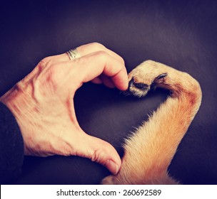 background of a person and a dog making a heart shape with the hand and paw toned with a retro vintage instagram filter effect app or action