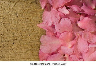 background: petals of Camelia Sasanqua or Japonica, pink, heart-shaped, resting on an old wooden plank, positioned to create a border of petals or a frame, light, shadow, winter flowering, Italy