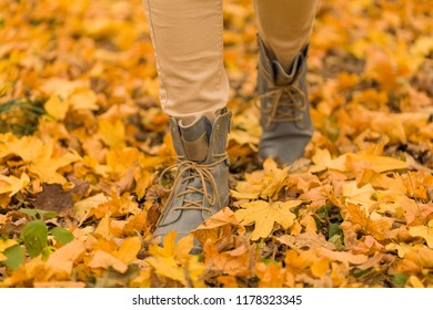 Background picture of forest walk on autumn leaves.