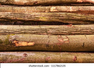 background of pine tree logs fresh cut and stacked