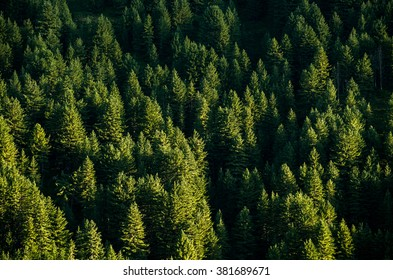 background pine wood wallpaper green forest top view.