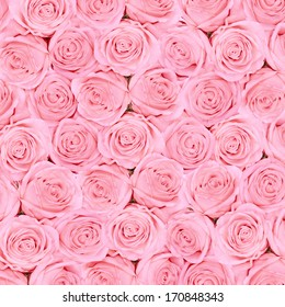 Background of pink  bright beautiful roses
