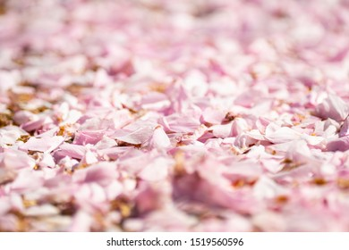 background of pink flowers petals