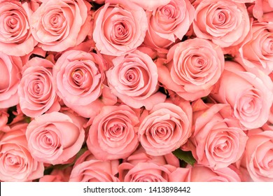 Background of pink orange and peach roses. Fresh pink roses. A huge bouquet of flowers. The best gift for women