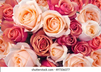 Background of pink orange and peach roses