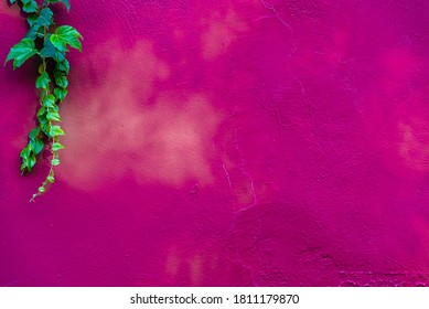 Background of a pink wall with green leaves in one corner.