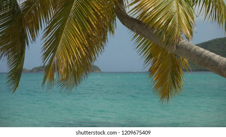 Background Plate of Large palm tree and islands is the distance for green screen