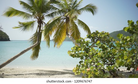 Background Plate of Large palm trees surrounded by plants for green screen