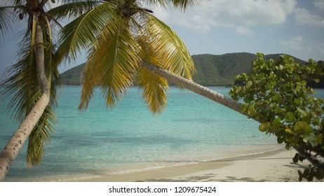Background Plate of Palm trees hanging over the Caribbean beach for green screen