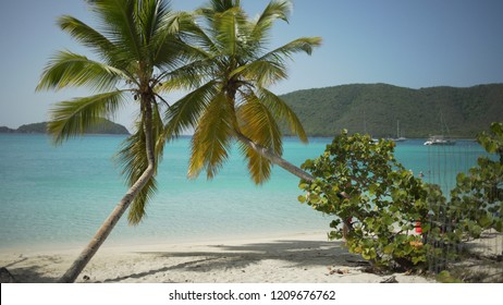 Background Plate of Palm trees making an x on the beach for green screen