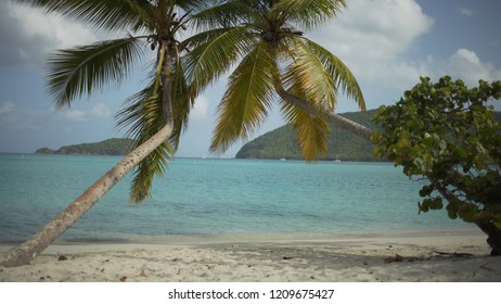 Background Plate of Palm trees on a cloudy day in the Caribbean for green screen