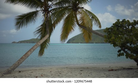 Background Plate of Palm trees on a beach on an overcast day for green screen