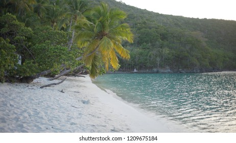 Background Plate of Palms near the shore of the Caribbean beach for green screen