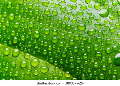 Background of rain water droplets on the green leaf.