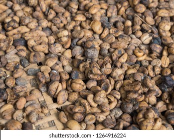 background of raw coffeebeans