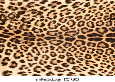 background of real leopard skin