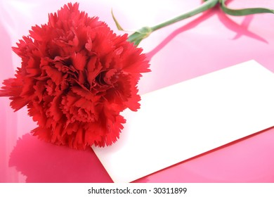 Background with a red carnation and place for the text.