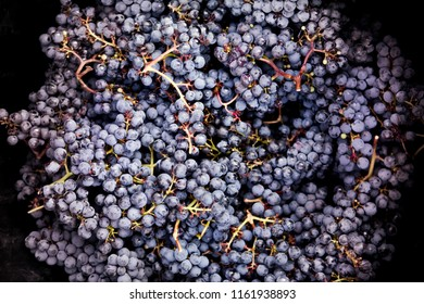 Background of red grapes after harvesting