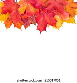 Background with red maple leaves in fall