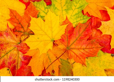 Background red and orange autumn leaves. Leaf group.