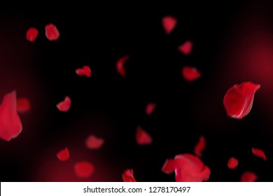 Background with red rose petals. Falling red flower petals and pink. Happy Valentines day card. Valentine's day background. Set of Naturalistic Rose Petals on black background