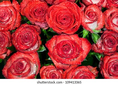 background from red wet roses with water droplets. macro